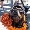 World Series: SPCA Giving Away Giants-Colored Animals