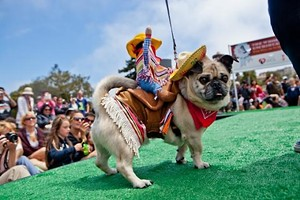 Meet Tucker. Last year's winner. - COURTESY OF THE SPCA
