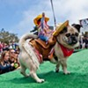 Get Your Pooches and Smooches at the Whole Enchihuahua Dog Show