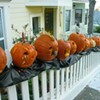 Have You Seen Those Bitchy-Looking Pumpkins in Bernal Heights?