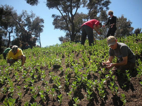 More than 2,500 volunteers have gotten dirty at Hayes Valley Farm. - HAYES VALLEY FARM/FLICKR