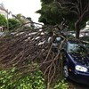 More Trees Falling in San Francisco After The Weekend Rain