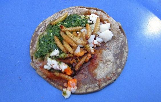 Moth larvae tacos at Don Bugito. - FLICKR/SHOCKINGLYTASTY