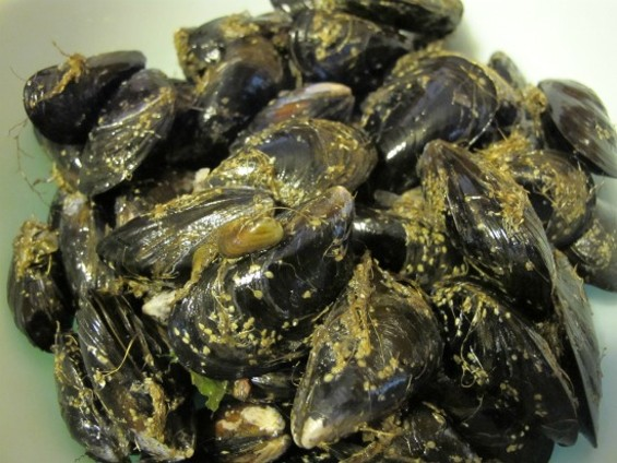 Mussels before bearding, storage, and cooking - PHOTOS BY JESSE HIRSCH