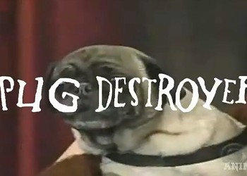 Here Are Some Pugs Screaming Death Metal