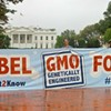 New Study Shows Voter Support for Genetically Modified Food Labeling in California