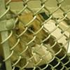 Paris Hilton Syndrome hits S.F. Animal Control