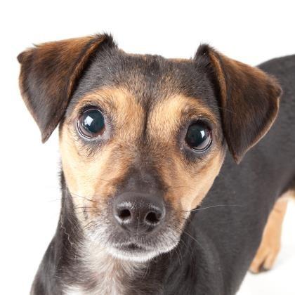 omg take her home - SAN FRANCISCO SPCA