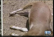 One of the unfortunate animals in question... - KPIX