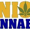 Organized Labor is Taking an Active Interest In Marijuana Legalization
