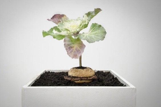 Patrick Lydon, What is Food: Burger and Cabbage, 2013.