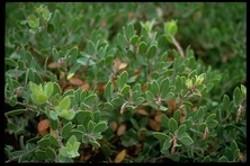 Pretty bush