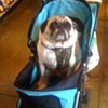 S.F. Trifecta: Tiny Dog, Baby Stroller, and Grocery Store