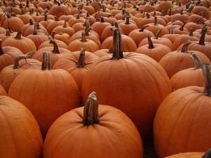 Pumpkins are like chocolates. You never know what you're gonna get. - SFANTII/FLICKR