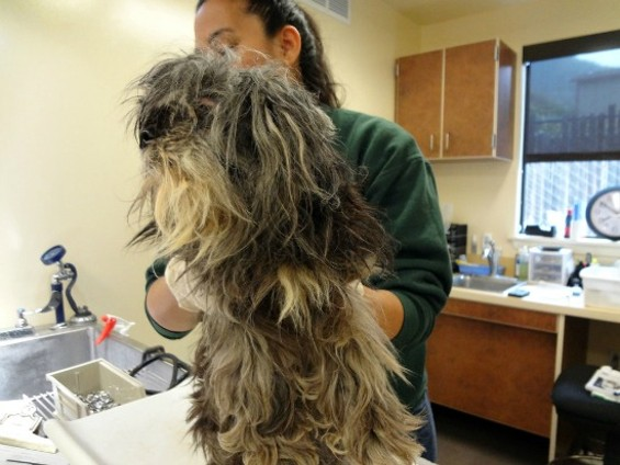 Ready for a haircut - MONTEREY COUNTY SPCA
