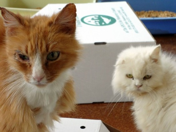 Ready for their own litter box - MONTEREY COUNTY SPCA