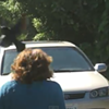 Really Mean Blackbird Pisses-Off Pedestrians in Golden Gate Park (VIDEO)