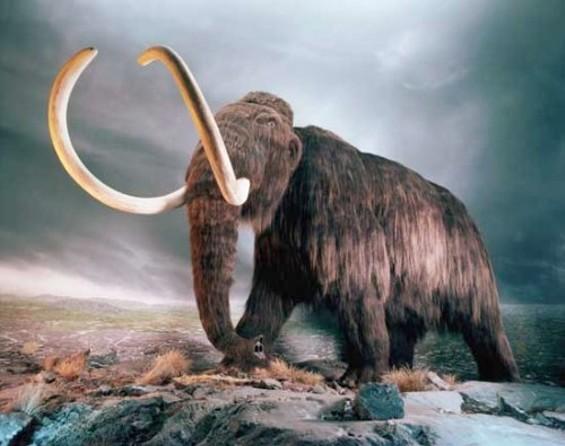 woolly_mammoth1.jpg