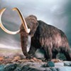 Recent Acquisitions: Mammoths Once Ruled San Francisco