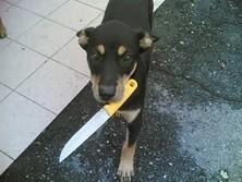 Revenge of the dogs?