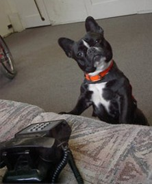 Ring, ring! Bad news, Hearing Dog Program...