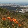 San Francisco Green Film Festival (5/28-6/3)