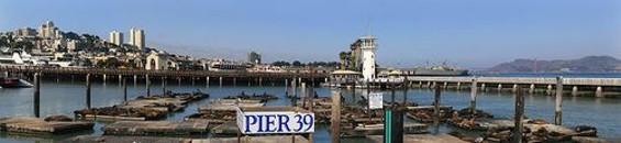 800px_california_sea_lions_at_pier_39_august_7_2009_thumb_500x115.jpg