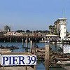 Sea Lion Horde at Pier 39 Steadily Growing