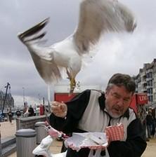 Seagulls ... the real culprits