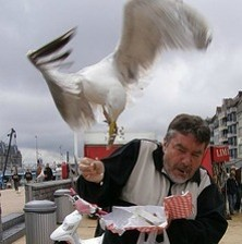Seagulls ... the real culprits