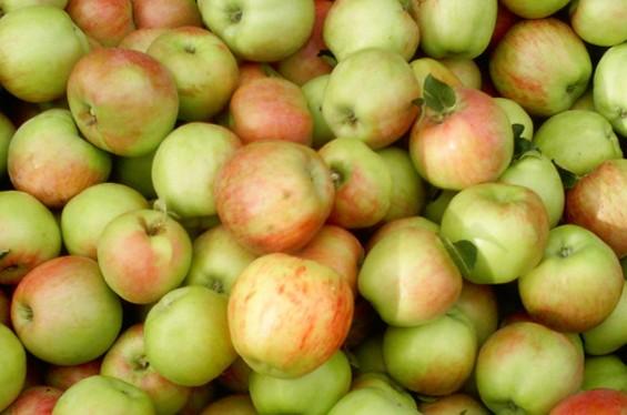 gravenstein_apples.jpg