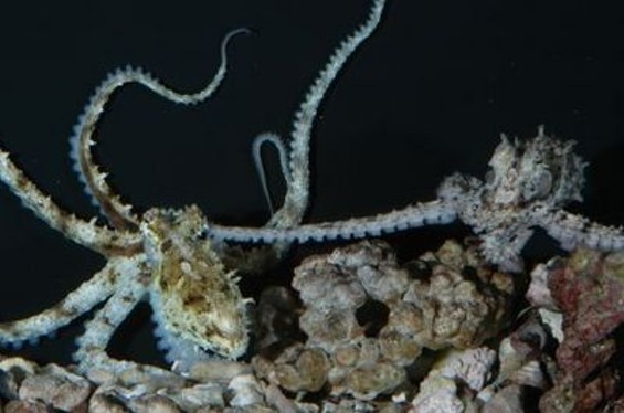 holding_tentacles_thumb.jpg
