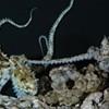 Snorkeling Berkeley Scientists are Peeping Toms
