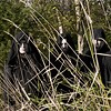 Sunn O))) slowly inverts expectations