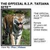 Tatiana The Tiger On MySpace: Don't Look So Shocked