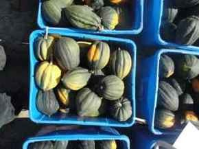 Terrorize the squash-phobic in your life. - CRAIGSLIST