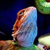 PETCO Organizes National Reptile Rally
