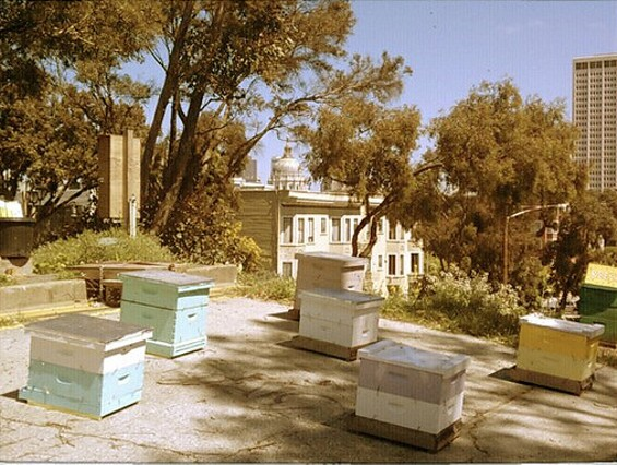 The beehives at Hayes Valley Farm. - EDIBLEOFFICE/FLICKR