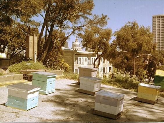 The beehives at Hayes Valley Farm. - EDIBLEOFFICE/FLICKR