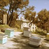 The Beehives Are Leaving Hayes Valley Farm, But You Can Buy Honey Before They Go