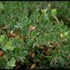 Wonder of Wonders: *Everybody* Seems Happy With Relocation of 'Extinct' Presidio Plant