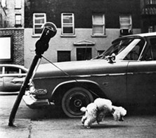 dog_and_parking_meter.jpg