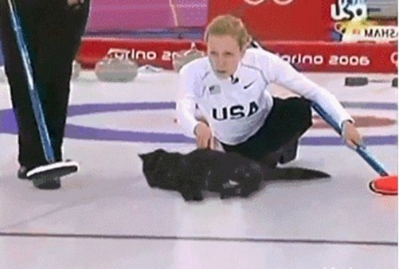 The newest Olypmic sport: Cat curling - IMGUR/REDDIT