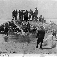 As Seen on a Dead Whale: Advertising Changes With the Tides