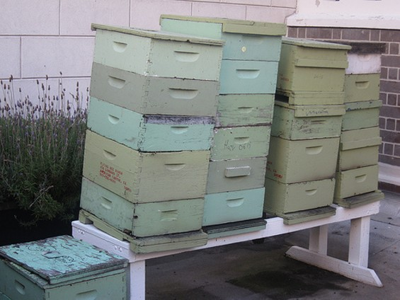 The smallest rooms at the Fairmont are for the hardworking honeybees - CARINA OST