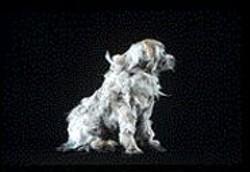 LAUREN  DAVIES - The woolly-furred Aussie Dog.