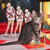 Puppies and Kittens! Check Out Macy's Pet Adoption Display