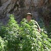Federal Grand Jury Digs Into Mendocino Marijuana Growers