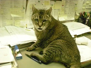 This isn't the actual cat, but you get the idea - JOE ESKENAZI