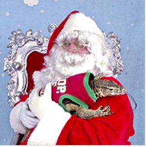 This lizard would really like a new sweater for Christmas ... just a guess - PHS